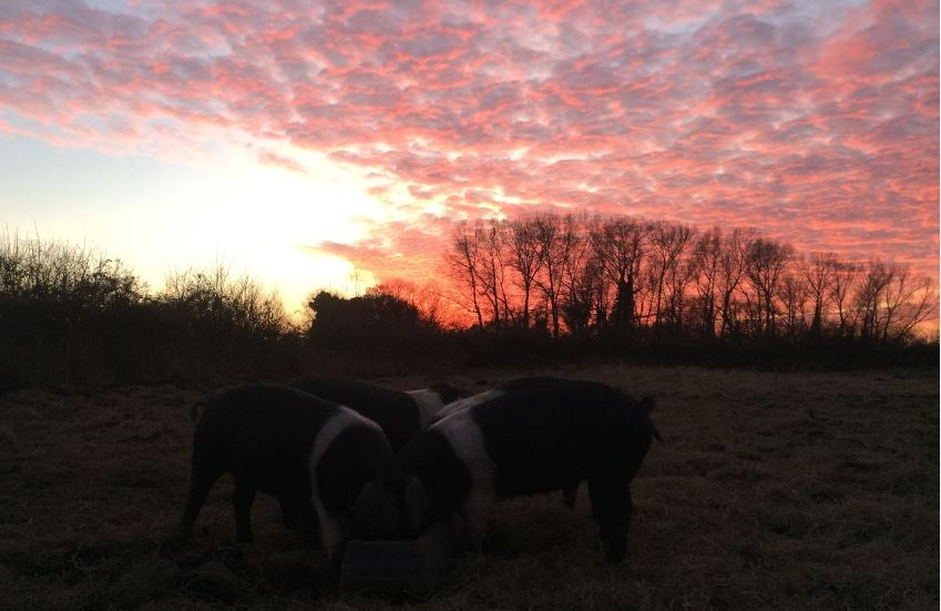 October 2017 Farm Round Up - Buttle Farm